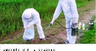 رش-مبيدات بالمدينة المنورة